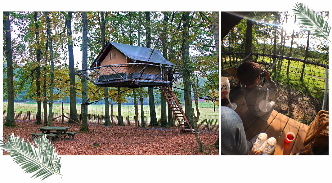 Tree-Tents4